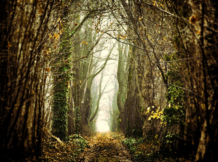 Mystic forest path in autumn Autumn Background Countryside Dark Daylight Fantasy Foggy Forest Graphic Landmark Landscape Leaves Mystic Nature Nobody Non-urban Outdoor Rural Scenic Tree TreePorn Wallpaper WoodLand Wilderness Trunk