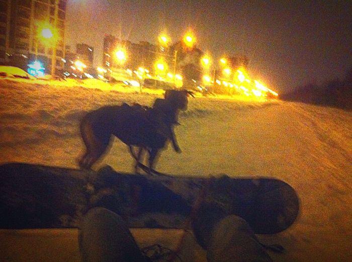 ночной город шуваловский сноуборд Питер упряжка питбуль