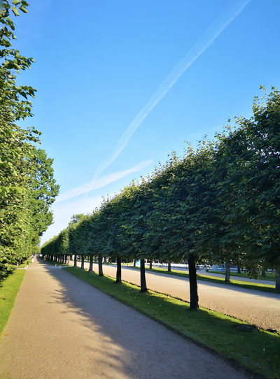 Empty road along plants and trees against blue sky