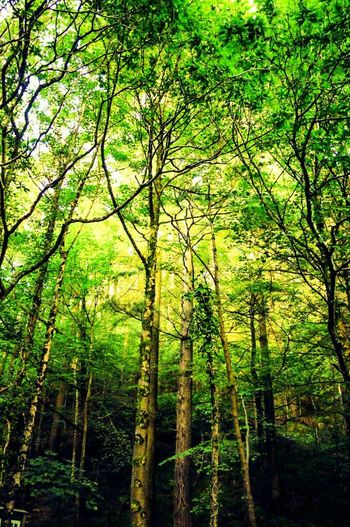 I love walking these woods Trees Treescollection WoodLand Greenery Countryside Rural Cornwall Nature Colours