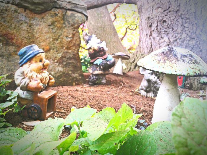 Gnomes Garden Gnomes Flower Fantasy