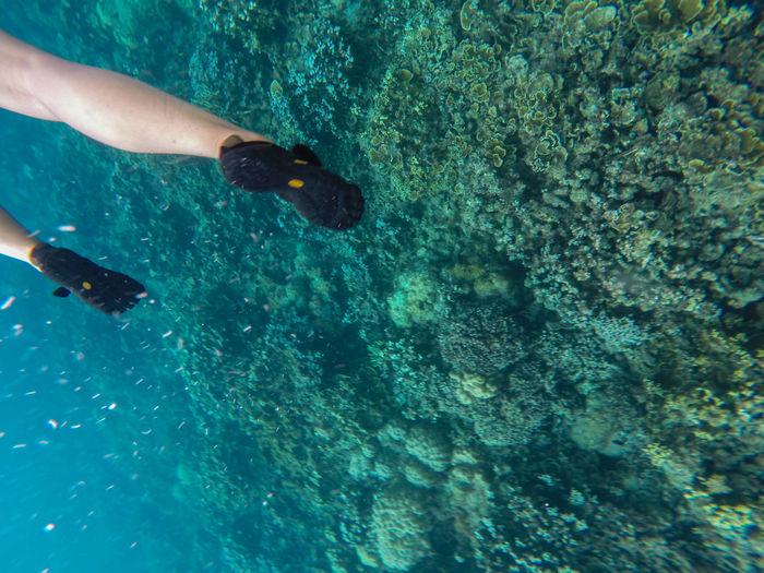 Just keep swimming Backgrounds Carefree Coral Dive Enjoyment EyeEm Best Shots EyeEm Gallery EyeEm Nature Lover EyeemPhilippines Gopro Nature Recreational Pursuit RISK Sea Life Swimming UnderSea Underwater Water Wildlife