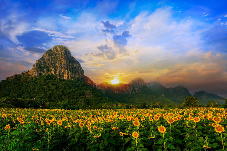 View of yellow flowers on field against cloudy sky