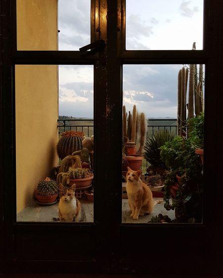 Waiting Cats Two Cats Cactus Plants Terrace Daily Life Indoor Outdoor Windowdoor Entrance Door Waiting