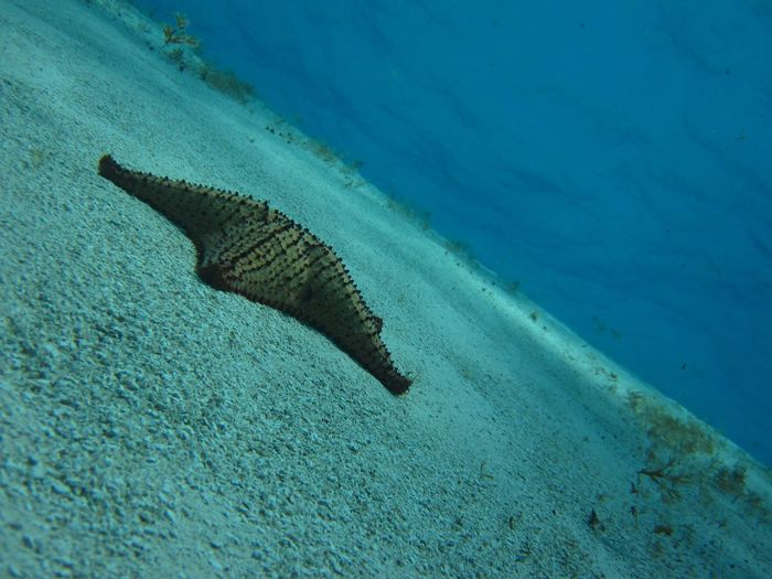 Beauty In Nature Blue Close-up Day Elevated View Nature No People Outdoors Scuba Diving Starfish  Tranquility Underwater