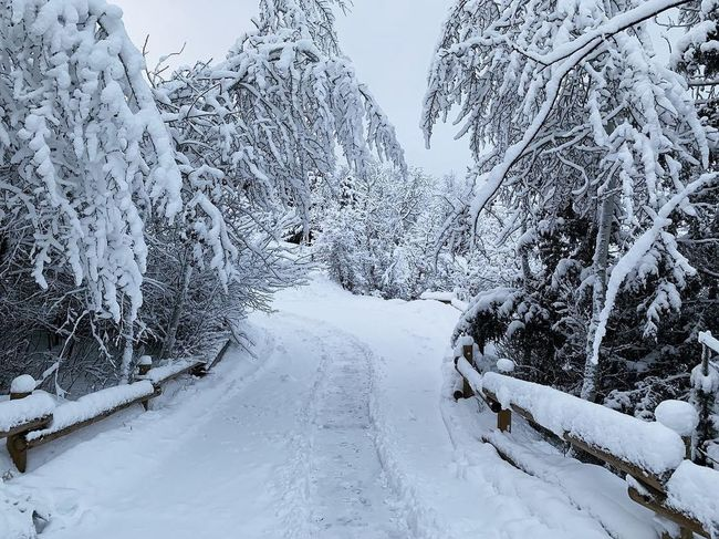 waking up to 15-20 inches of snow. ❄️🏔 Park City, Utah Wasatch County Wasatch Mountains Utah Snow Cold Temperature Winter Tree Beauty In Nature Nature Scenics - Nature