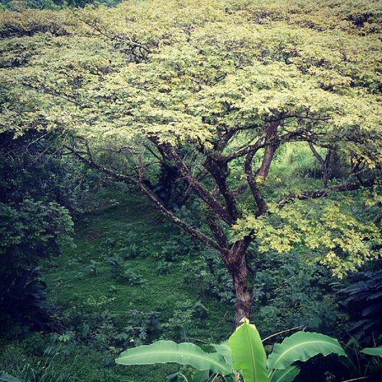 Dotspin Betosalvestrini Art Original Venezuela Sancristobal Natural - peaceful green 5