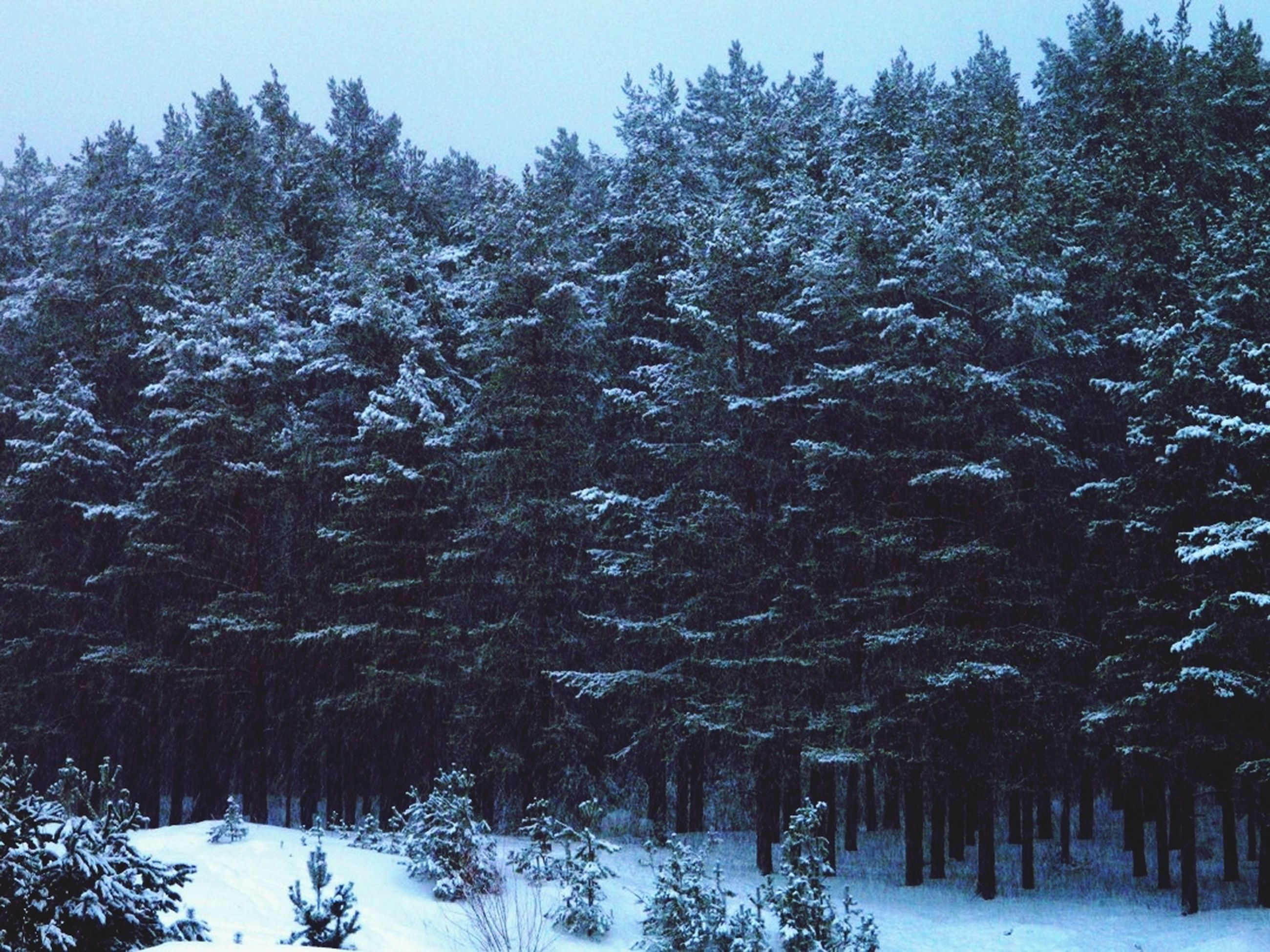 snow, winter, cold temperature, season, tree, weather, covering, tranquility, white color, tranquil scene, nature, beauty in nature, frozen, landscape, covered, scenics, field, non-urban scene, snow covered, growth