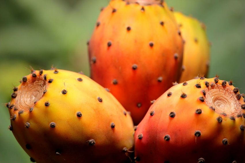 Fichi d'India Prickly Pear Cactus Fruit Flower Multi Colored Cactus Red Yellow Close-up Food And Drink Plant