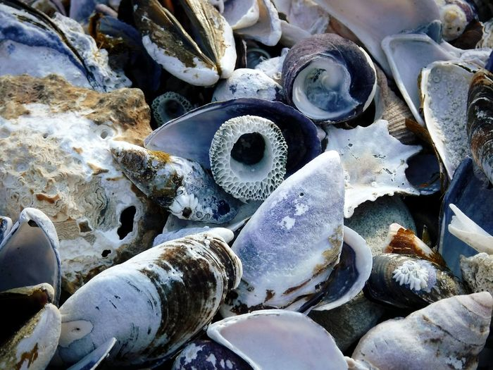 Crush of sea shells