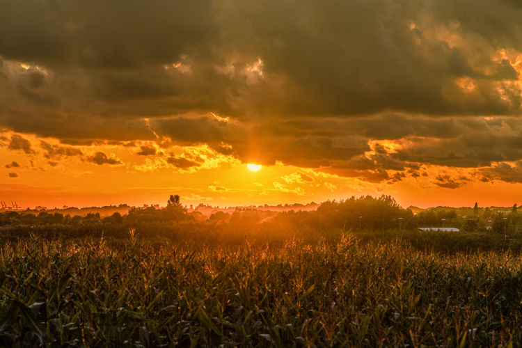 down on the farm corn and sunset Farmland Sunlight Agriculture Beauty In Nature Cloud - Sky Cor Corn Field Environment Farming Field Landscape Lens Flare No People Orange Color Outdoors Rural Scene Scenics - Nature Sky Storm Cloud Stormy Summer Sun Sunlight Sunset Tranquility