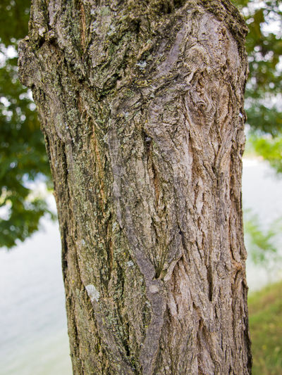 tree trunk near