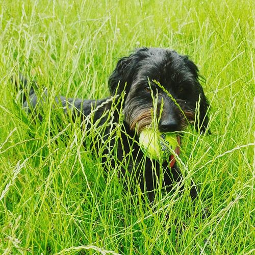 Through the grass Nature Animals In The Wild Close-up Beauty In Nature Outdoors Summer Tranquility City Sticking Out Tongue Pets Domestic Animals Dog Animal Themes One Animal Park Life Park Day Grass Green Color EyeEmNewHere