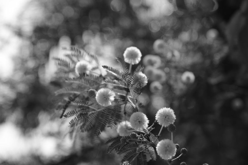 Black & White Brazil Nature Beauty In Nature Black And White Blackandwhite Blackandwhite Photography Grouth