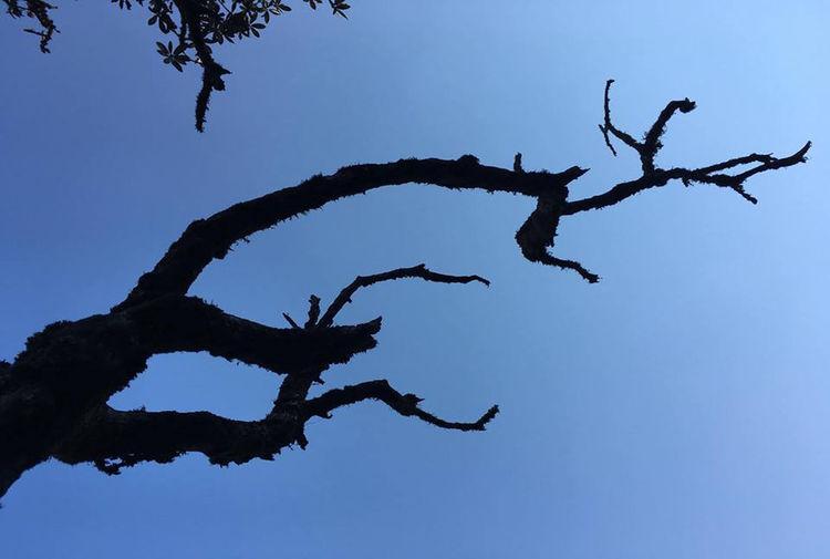 Branch of dead