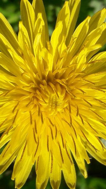 Yellow Petal Flower Flower Head Nature Fragility Close-up Beauty In Nature Freshness Growth Outdoors Plant Day No People