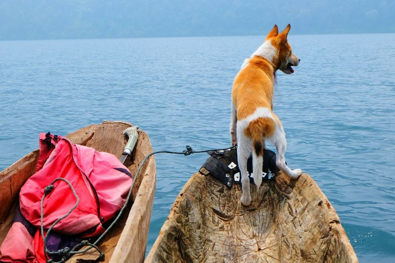 Dog standing on boat in sea