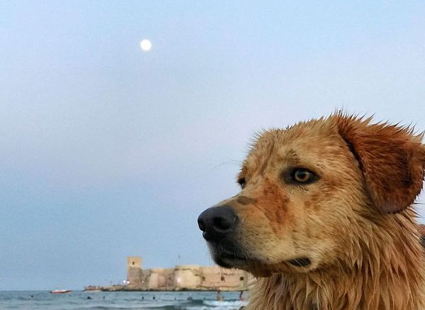 holiday sea and dog Animal One Animal Animal Themes Sky Mammal Water No People Canine Dog Looking Vertebrate Nature Looking Away Pets Domestic Animals Moon Domestic Outdoors Day Animal Head