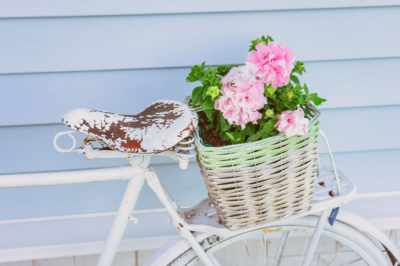 Close-up of pink flowering plant in basket on table