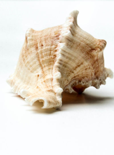 Close-up of a shell