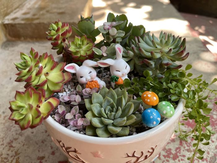 High angle view of various flowers in container