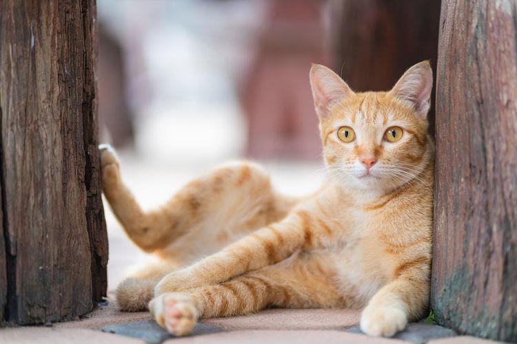 Portrait of cat lying on tree trunk