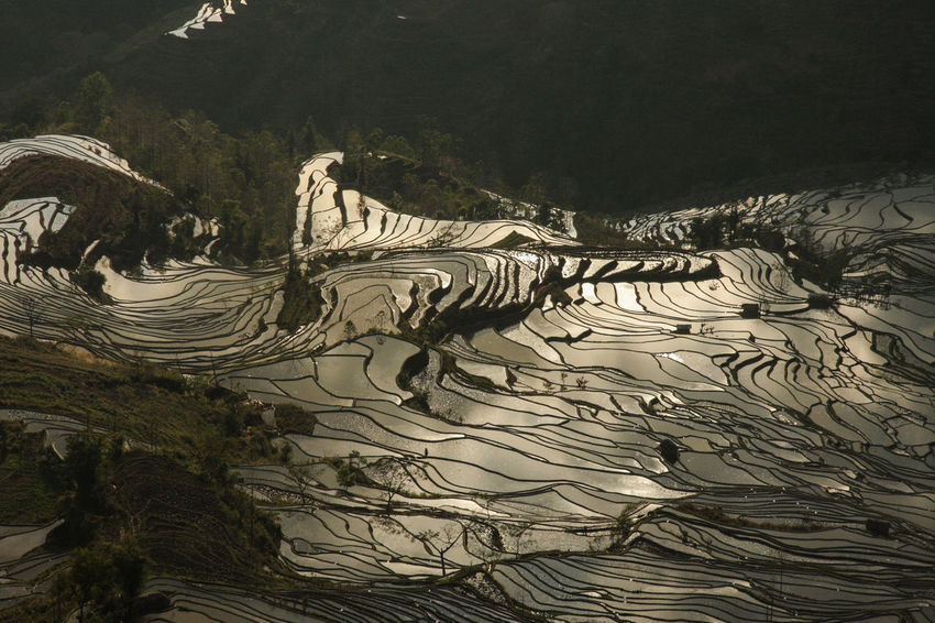Agriculture China Golden Nature No People Outdoors Reflection Reflections Rice Rice Field Rice Fields  Rice Paddy Rice Terraces Sunset Tree World Heritage Yuanyang Yuanyang Terraced Fields Yunnan Lost In The Landscape Perspectives On Nature