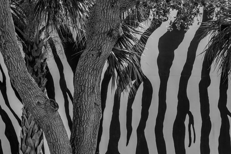 Faux forest Beauty In Nature Branch Close-up Day Growth Mammal Nature No People Outdoors Palm Tree Tree Tree Trunk Worldwide Photowalk 2017 Zebra Stripes
