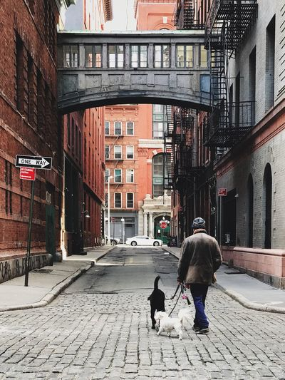 TriBeCa 2017 | morning constitutional Dog Building Exterior Architecture Street One Man Only Manhattan Downtown City Cobblestone