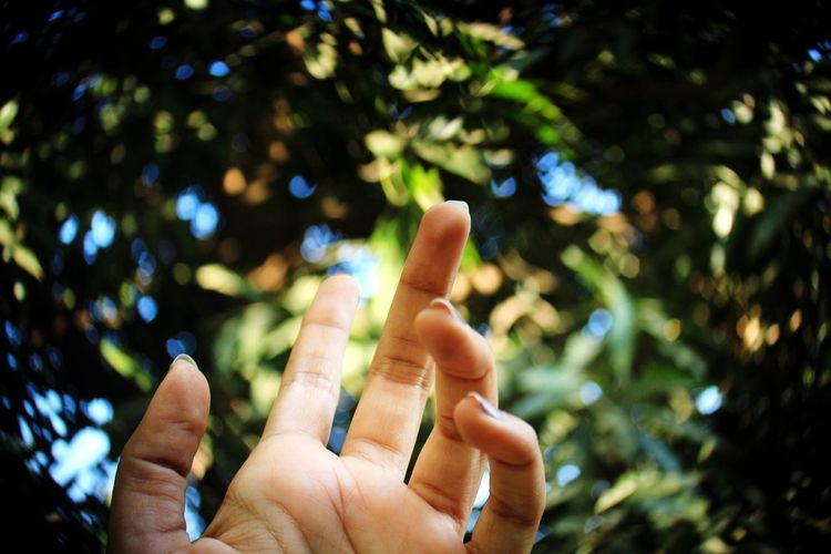 Low angle view of human hand against tree