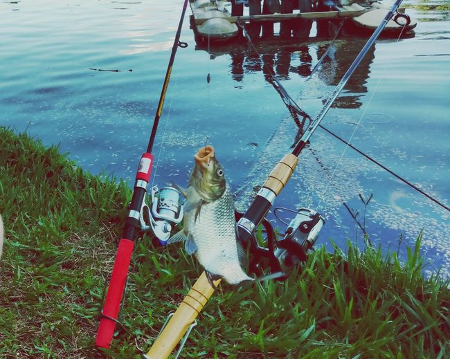 High angle view of fish hanging in rod against lake