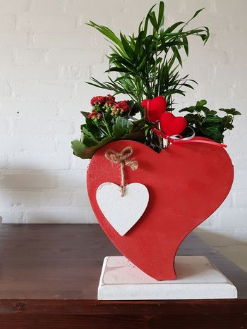 Valentine Valentine's Day  Love ♥ Love Lovely Heart Shape Red Indoors  Love Plant I Love You Love Lock Valentine's Day - Holiday Flower Arrangement Romance Valentine Day - Holiday Mother's Day Potted Plant Falling In Love Date Night - Romance