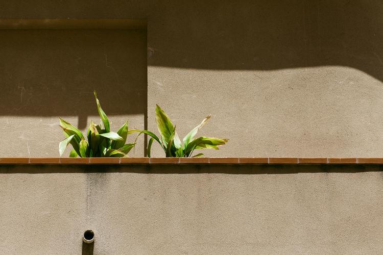 Plants Growing On Balcony