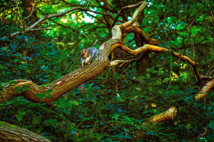 View of lizard on tree in forest