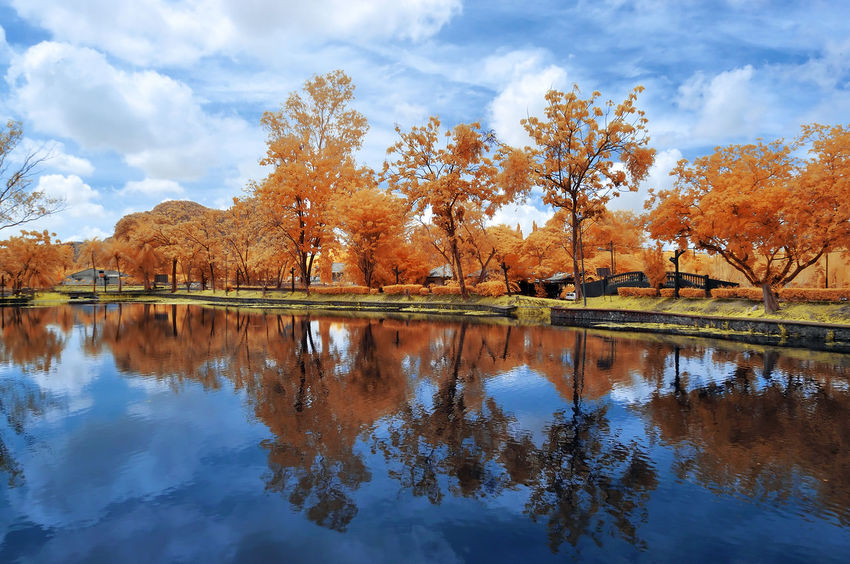 Beautiful and colorful infrared photo of a garden Beauty In Nature Day Infrared Photography Lake Landscape Nature No People Outdoors Reflection Scenics Sky Tree Water