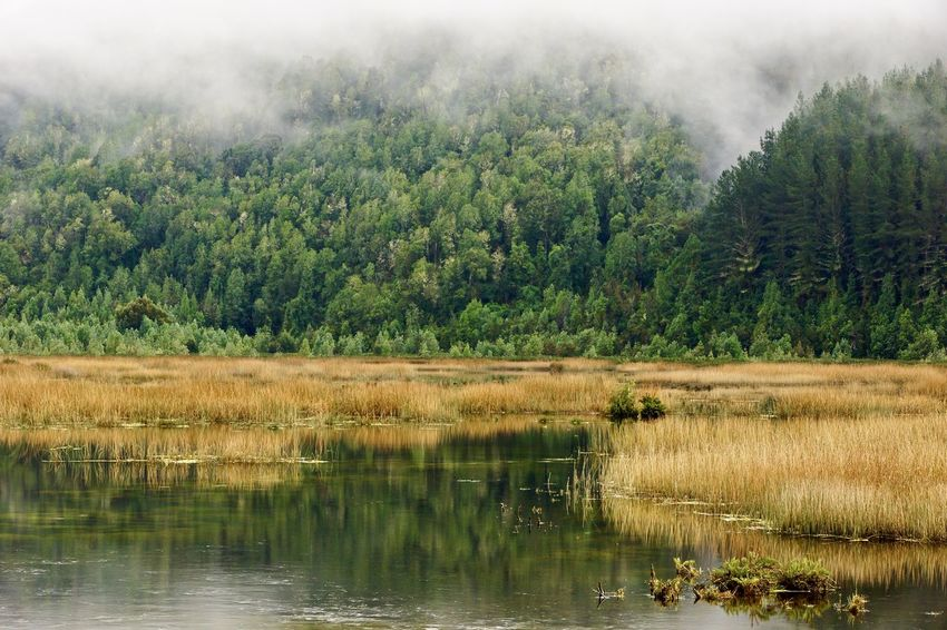 Wetland close Punucapa village... EyeEmNewHere Morning Nature Reflection The Week On EyeEm Tree Wetland Animal Themes Animals In The Wild Beauty In Nature Day Foggy Morning Forest Growth Lake Landscape Nature No People Outdoors Reflection Scenics Sky Tranquility Tree Water