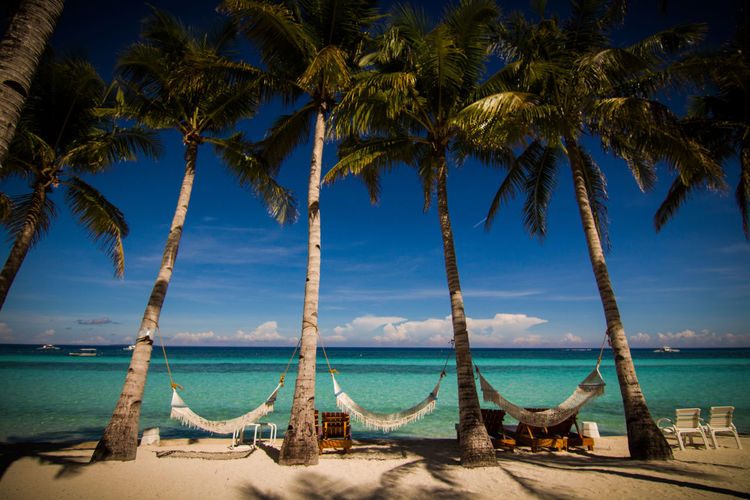 Beach Beauty In Nature Blue Day Horizon Over Water Nature No People Outdoors Palm Tree Phillipines Sand Scenics Sea Sky Tranquil Scene Tree Tropical Climate Water