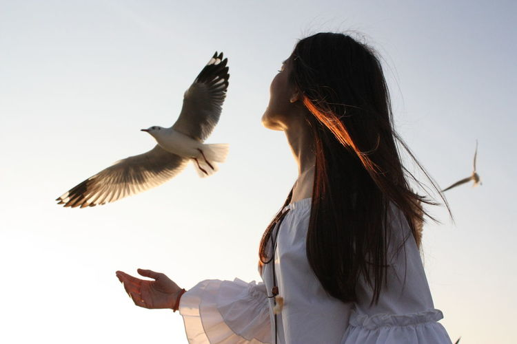 Animal Themes Animal Wildlife Animals In The Wild Bird Clear Sky Day Flying Low Angle View Motion Nature One Animal One Person Outdoors People Real People Rear View Seagull Sky Spread Wings Young Adult Young Women