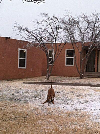 Fortheloveofdogs Yogibear Snowfun!