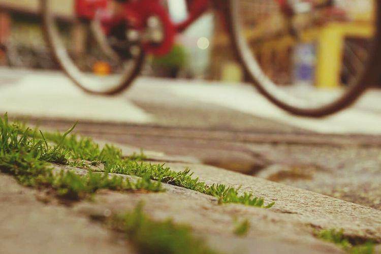 City Life Grass Bike Fotomarathonaalborg2015 Red Bike Focus On Foreground Focus On Background