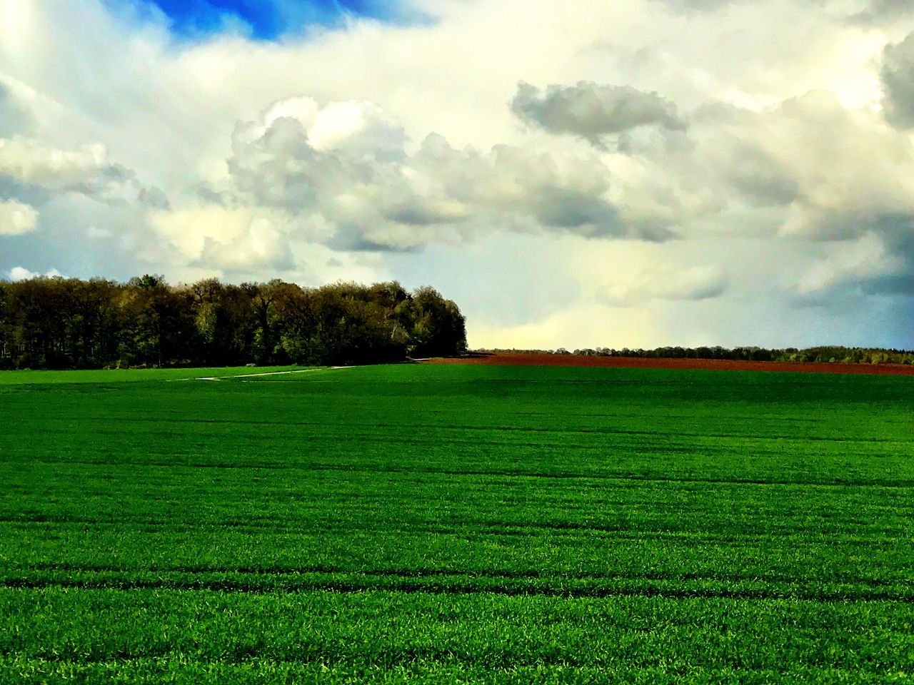 field, tranquility, agriculture, landscape, nature, tranquil scene, beauty in nature, sky, tree, growth, scenics, no people, grass, day, rural scene, cloud - sky, green color, outdoors