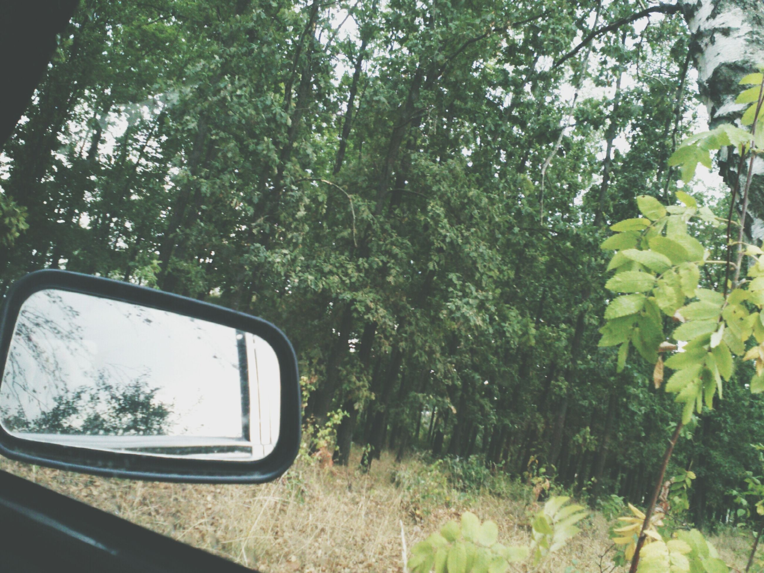 tree, transportation, car, mode of transport, land vehicle, growth, vehicle interior, nature, reflection, green color, day, side-view mirror, window, sky, glass - material, transparent, travel, close-up, outdoors, plant