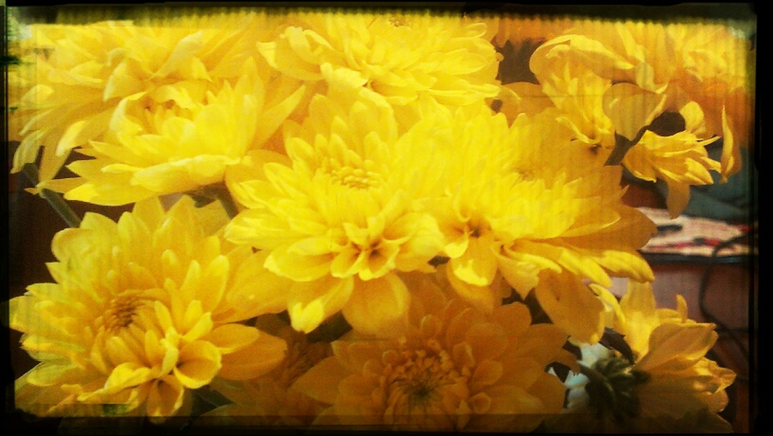 transfer print, auto post production filter, flower, yellow, petal, fragility, freshness, flower head, indoors, close-up, beauty in nature, nature, growth, no people, blooming, high angle view, frame, vibrant color, plant, day