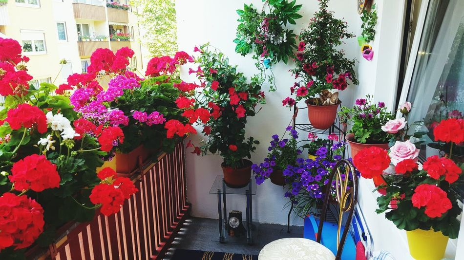 Flower Plant Potted Plant Outdoors Day Growth Multi Colored No People Architecture Building Exterior Built Structure Window Box Nature Tree
