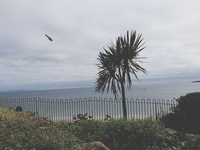 Tenby Pembrokeshire Wales❤ Outdoors Sea Beach Palm Tree Day Cloud - Sky Bird Sky No People Horizon Over Water Tree Water Nature Animal Themes Flying