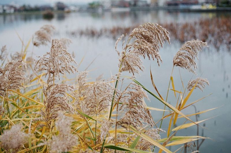Close-up of plants at lakeshore