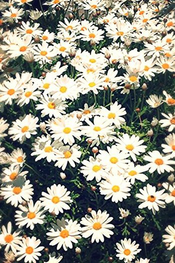 Spring Flowerofthegarden Nature Photography
