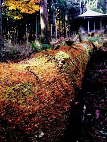 Japan 板室 木の俣 地蔵 Autumn Leaves