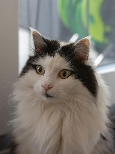 Mammal Feline