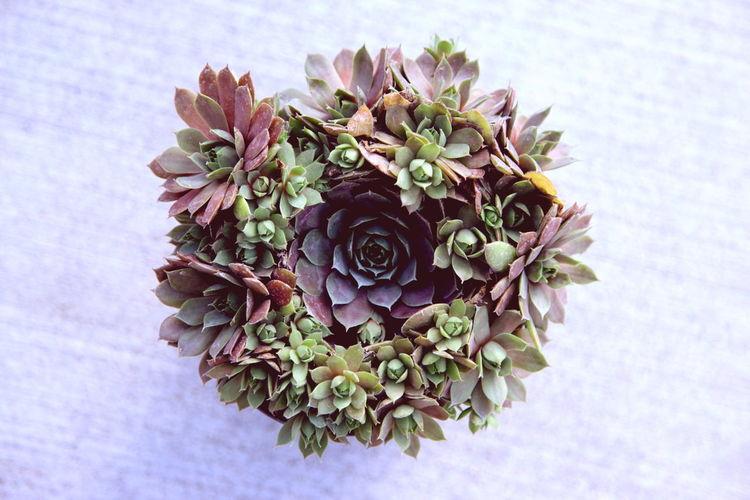 Rose Succulent Bouquet